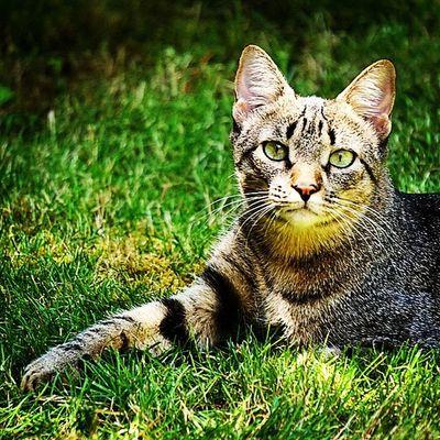 De posados en el jardín! Igersitzi Igerscats Igersanimals Alpha6000 igerstobago comoposa