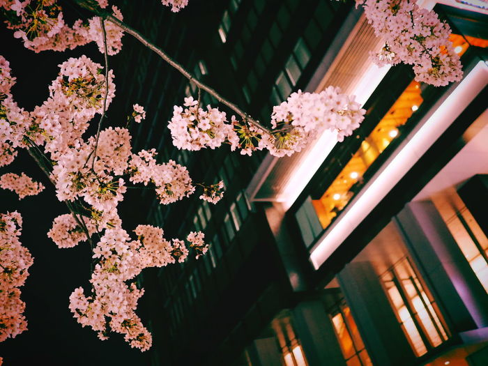 Low angle view of flowers blooming on tree