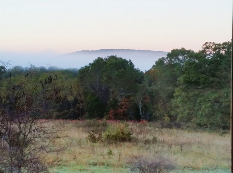 FogLandscape Tree Outdoors Scenics No People Pastel Colors In The Sky foggy glade dawn Ozarks