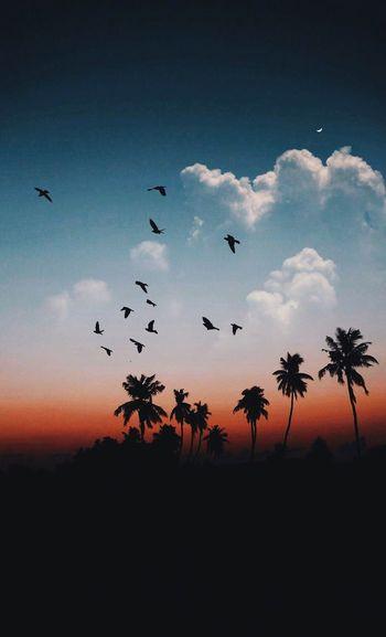 Bird Silhouette Flock Of Birds Nature Sky