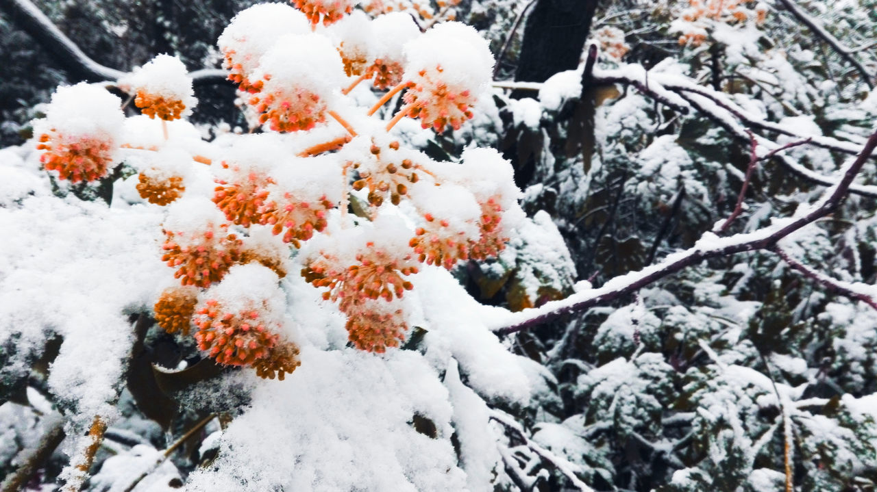 Close-Up Of Snow On Branches During Winter