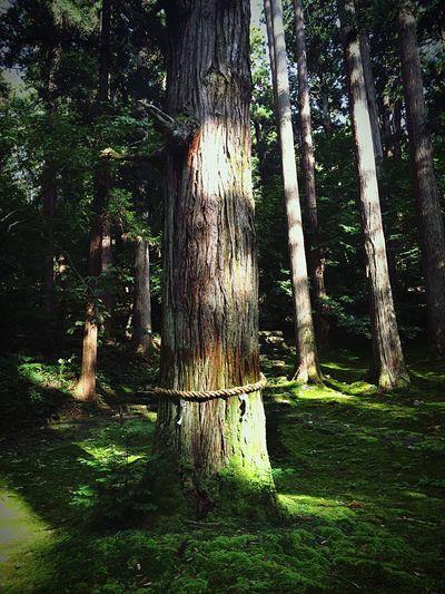 Japan Taking Photos Hanging Out Fukui