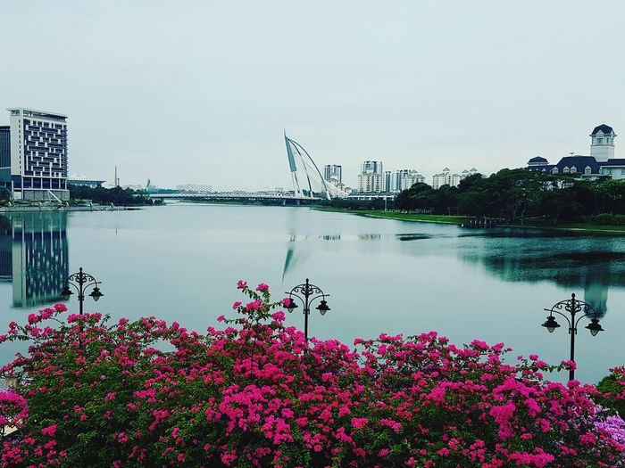 evening after rain Putrajaya Malaysia Lake Lake View Flower Water Outdoors Day Tranquil Scene Beauty In Nature No People Nature Tranquility Growth Sky Scenics City Urban Skyline
