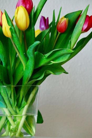 Close-up of purple tulips in vase