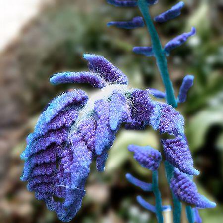 Edited Edit Edited My Way Fern Flower Growth No People Outdoors Purple