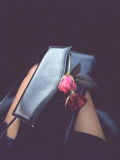 Flower Rose -