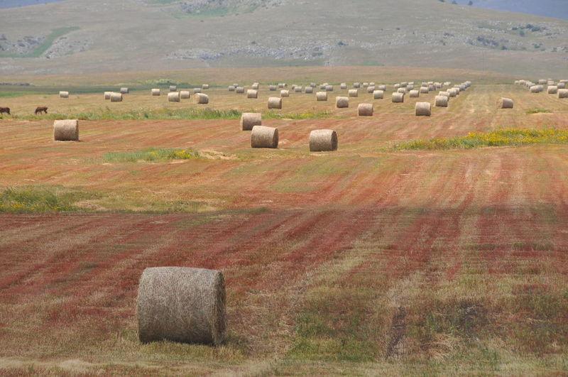 Hay bales on field