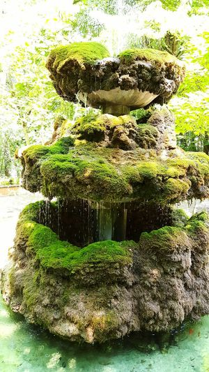 Fountain Fountain Whith Moss Woods Fountain Goldfish Water Source Pine Forest Whith Fountain