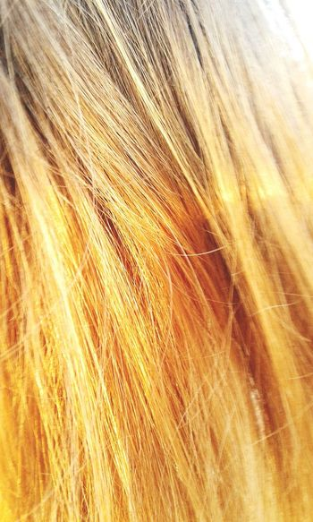 Hair Hairstyle Sun Golden Golden Hair  Orange Light Cool That's Me My Hair