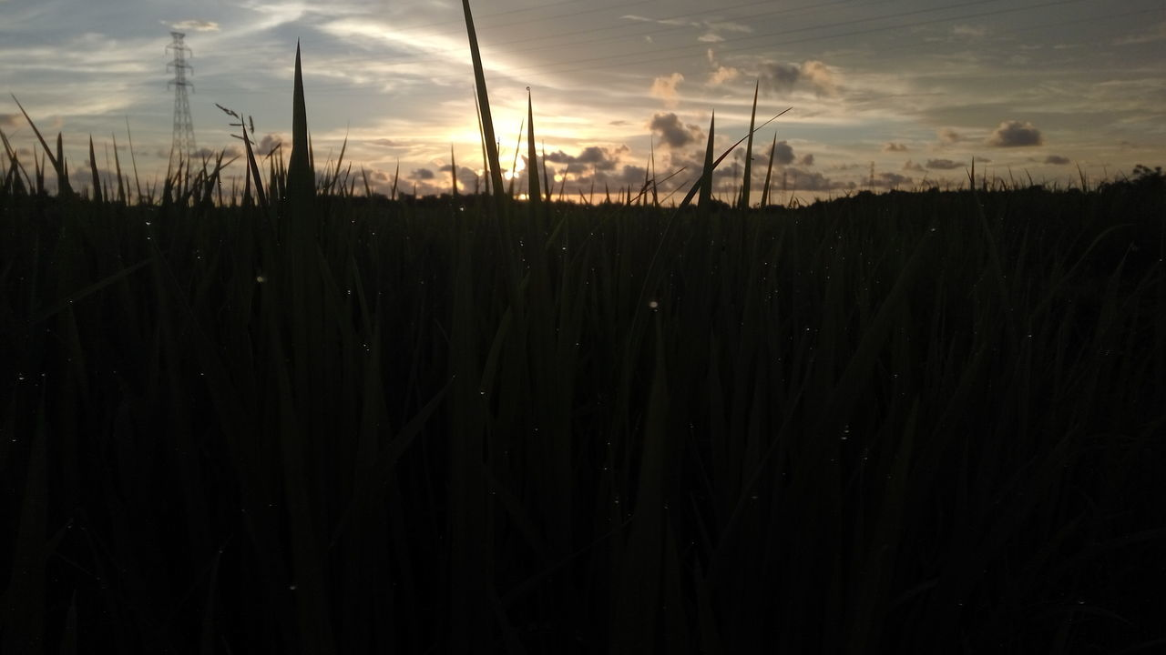 growth, nature, tranquility, tranquil scene, sunset, beauty in nature, outdoors, sky, no people, field, plant, scenics, silhouette, grass, close-up, day