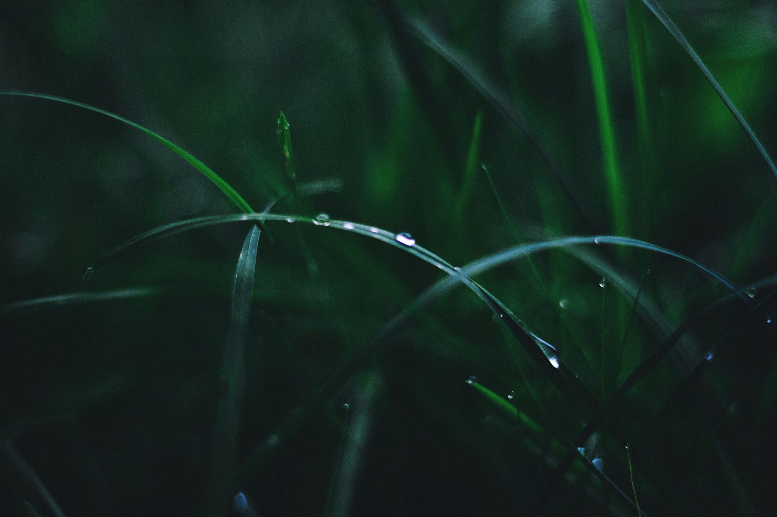 plant, growth, close-up, drop, water, nature, leaf, wet, focus on foreground, stem, beauty in nature, selective focus, dew, freshness, green color, fragility, botany, day, green, blade of grass, tranquility, outdoors, scenics, purity, remote