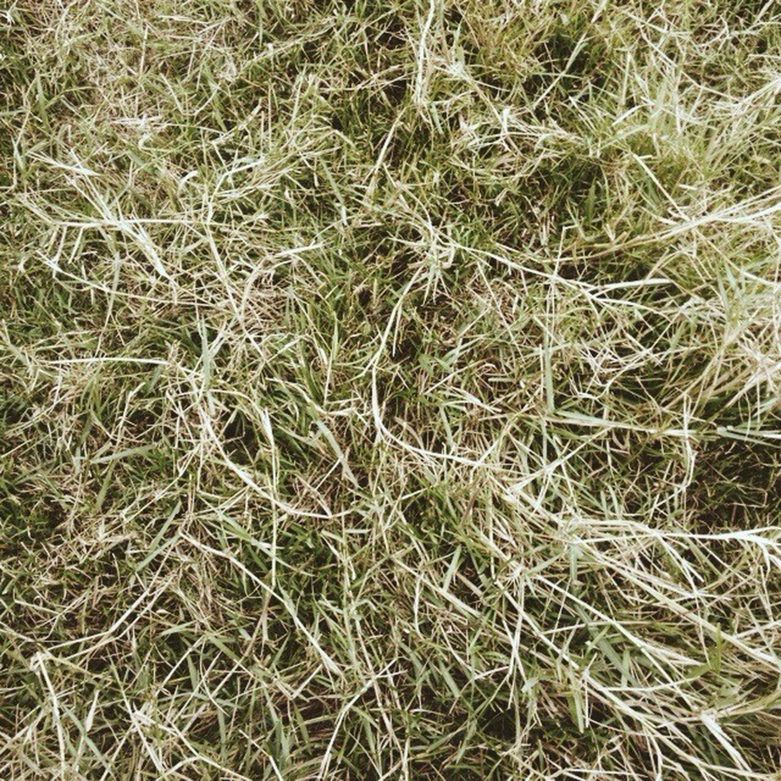 grass, field, high angle view, dry, growth, plant, nature, day, full frame, backgrounds, outdoors, no people, tranquility, rural scene, agriculture, grassy, farm, close-up, sunlight, hay