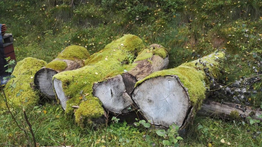Beauty In Nature Day Grass Green Color Moss Nature No People Plant Polypore