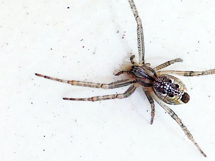 Spiderworld Hello World Spiders My Smartphone Life Macro Spider Spidey Check This Out Taking Photos