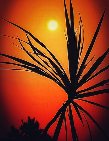 S I L H O U E T T E ☺ Rural Scene Nature Beauty In Nature Orange Color From My Point Of View Sunset_collection Close-up Silhouette Focus On Foreground The Week On EyeEm Sunset Red Sun Multi Colored Yellow Sunlight Sky Orange Red Color View Out Of The Window Plant Nature_collection Eye4photography