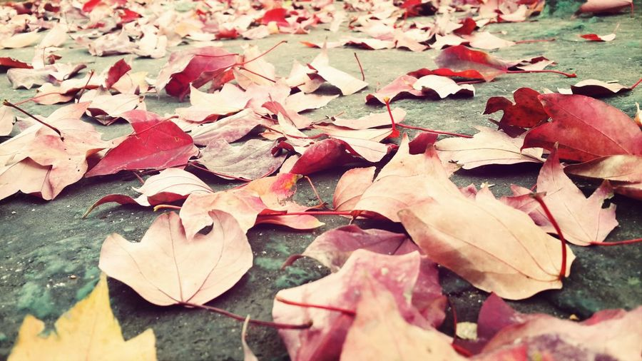 Full frame shot of autumn leaves on street