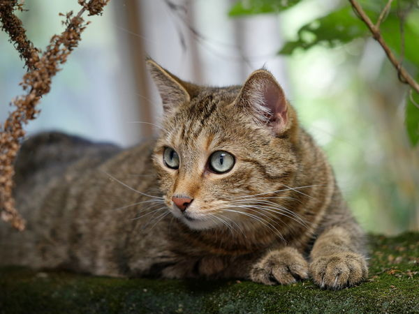 Cat Cute Cute Pets Macro Nature Outdoors Pet No People Animals Taking Photos From My Point Of View Feline Domestic Animals Whiskers Animal Themes Pet Portrait Caturday