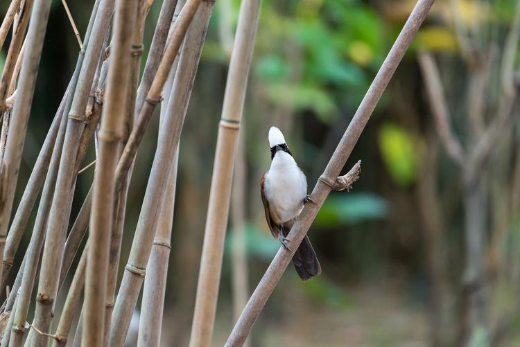 Animal Avian