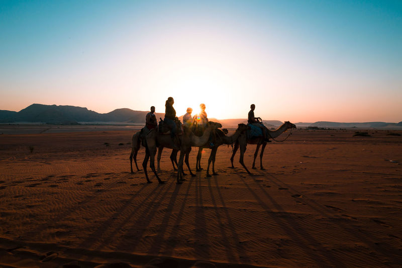 Glitch Camel Wadi Rum Desert Sunrise Sand Jordan Sunrays Canon Traveling
