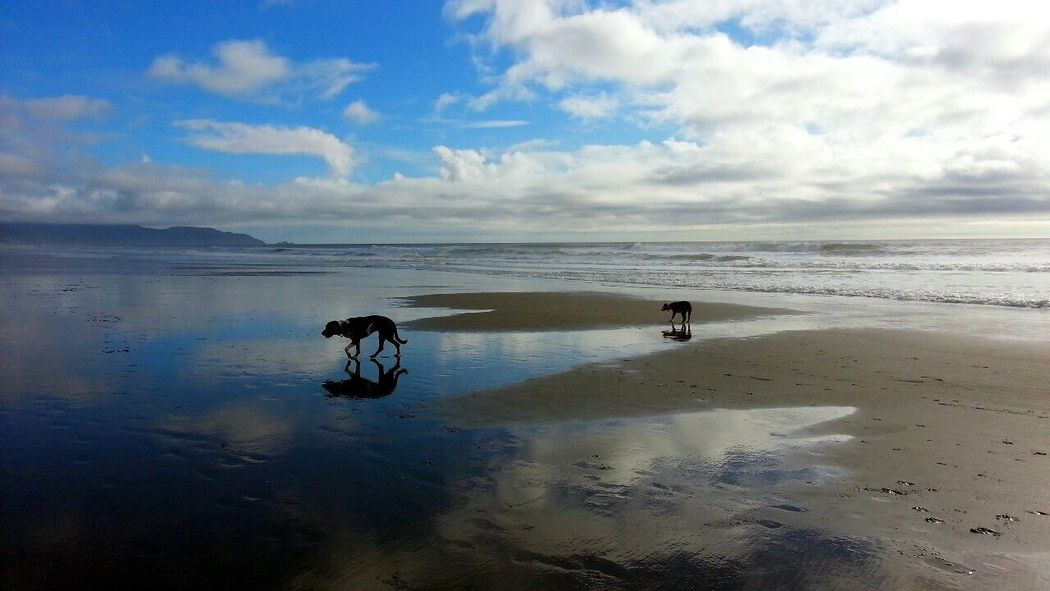 Pets Corner Spoon The Dog Toast The Dog Beach Water Reflections Creative Light And Shadow Summer Dogs Pitbull Catahoula Leopard Dog