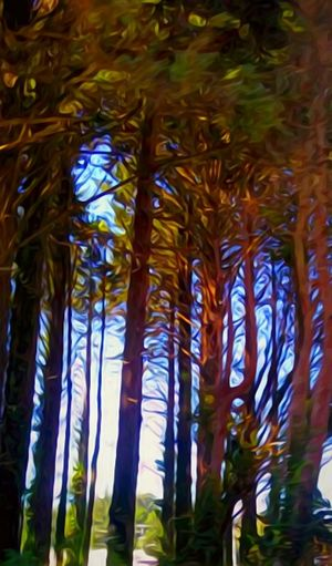 Tree No People Nature Outdoors Tree Trunk Day Beauty In Nature Tree Area Close-up Telling Stories Differently Lincoln City, Oregon Backgrounds Here Belongs To Me SPIRITUAL HEALING Tranquil Scene Front Or Back Yard Clear Sky EyeEm Best Shots Tranquility Point And Shoot Getty Images Multi Colored EyeEm Vision EyeEm Gallery Scenics EyeEmNewHere