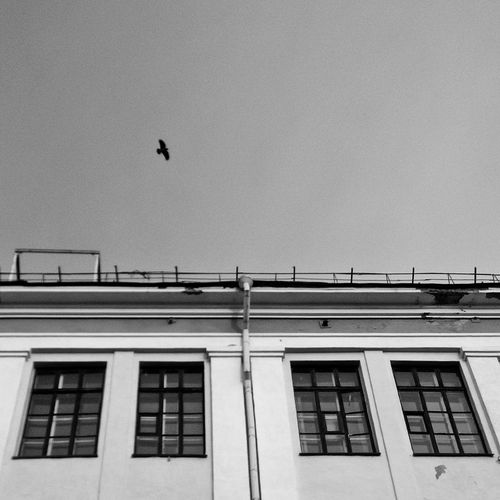 Building Exterior Bird Low Angle View No People Sky City Day Architecture Animal Themes Built Structure