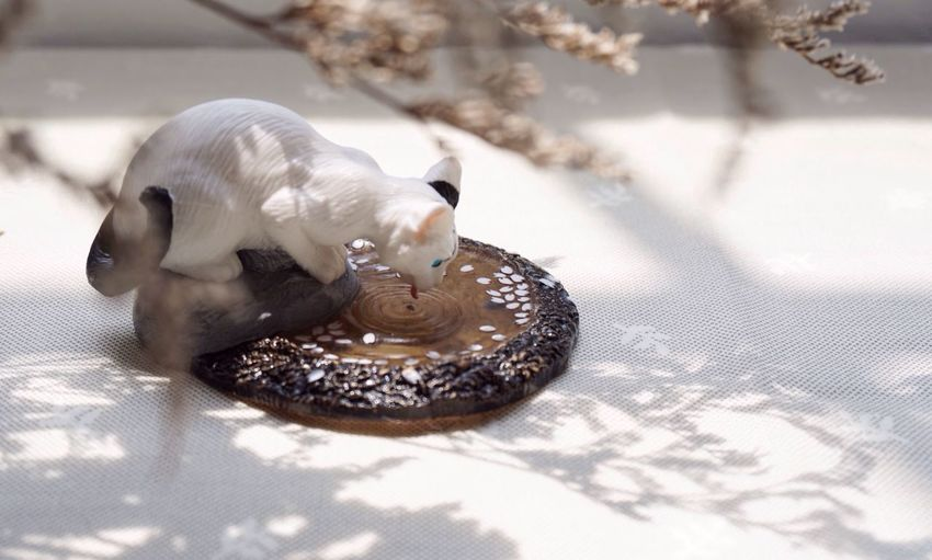 Doll Cat Doll Lover Drinking Water Cat