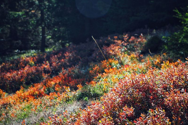 Autumn Nature Plant No People Landscape Outdoors Forest Beauty In Nature Leaf Growth Scenics Multi Colored Tree Day Close-up Sunlight Autmn View Autmn Colors Autumn Nature Beauty Autmn Landscape Wanderlust Globetrotter Green Color Beauty In Nature