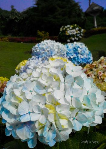 Good nite from indonesia 😉 Bunga Bungabunga Bungadantaman Flowers Flowers,Plants & Garden Blooms Blossom Blossoms  Mothernature Nature