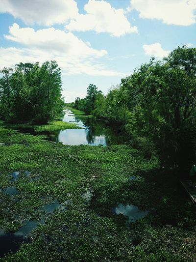 Different Beauty Swamp Lafitte