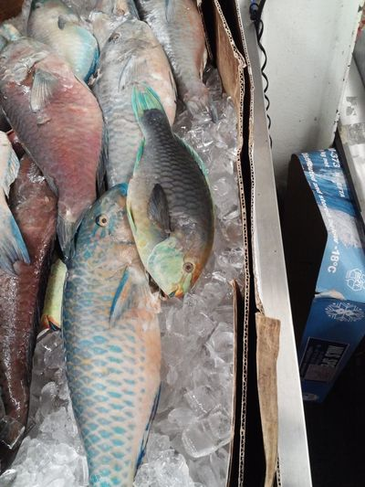 parrot fish is on the menu tonite. Taking Photos Food Porn Fish Hanging Out