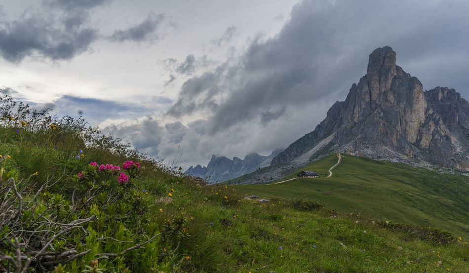 Day Flower Grass Green Color Growth Landscape Mountain Mountain Range Nature No People Sky Field Chalet Alps Valley Peak Clouds Dolomites Passo Giau Italy Storm Cloud Mountain Road Outdoors Mountain Peak Perspectives On Nature