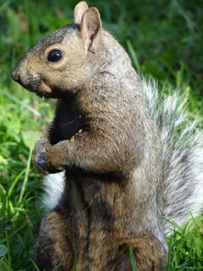 Taking Photos Walking Around Squirrel Capture The Moment