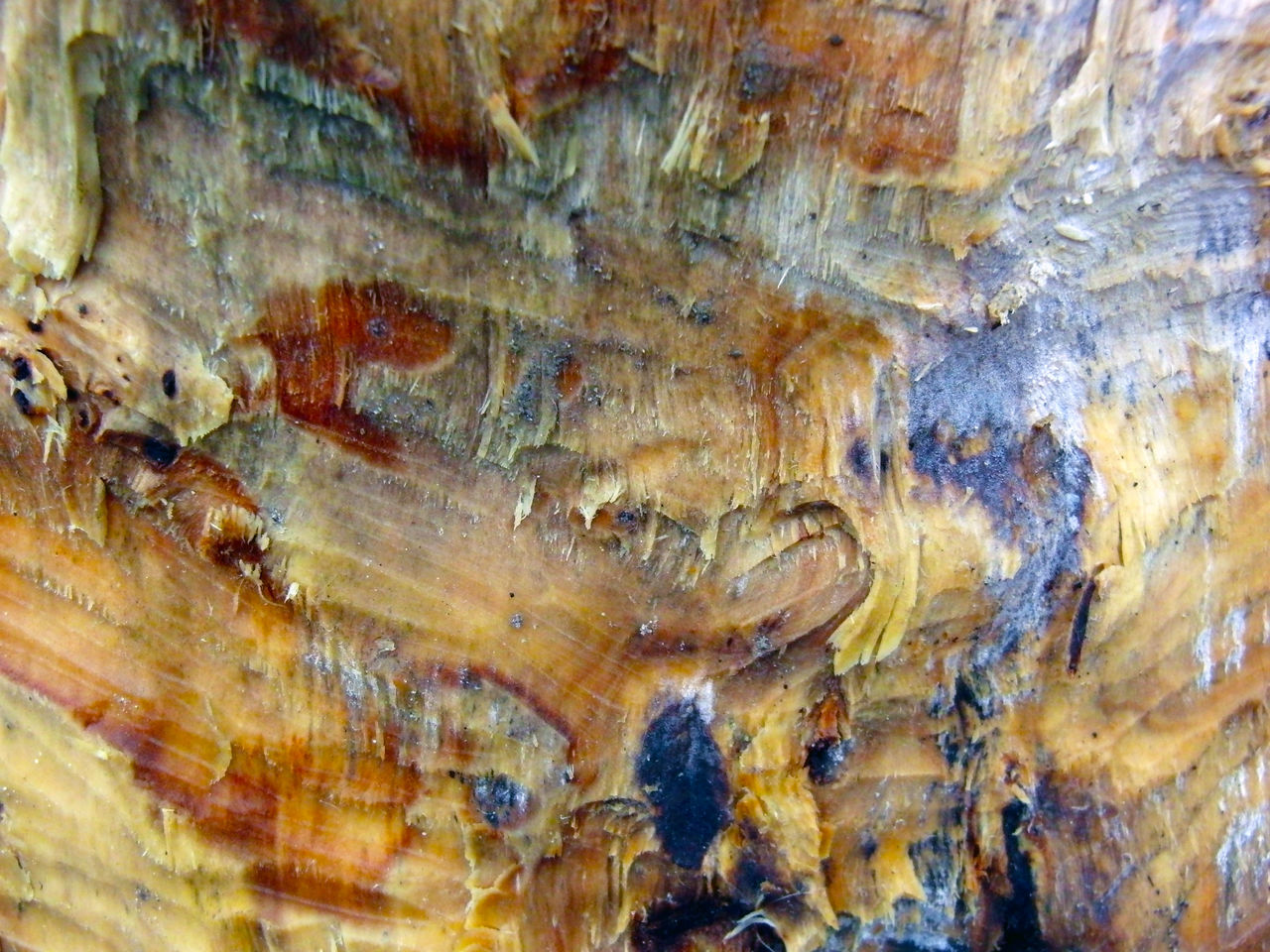 textured, nature, rough, pattern, close-up, rock - object, full frame, no people, backgrounds, outdoors, day, animal themes