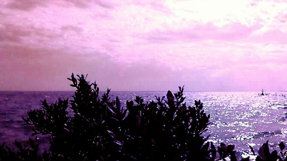 Ocean And Sky Pink!