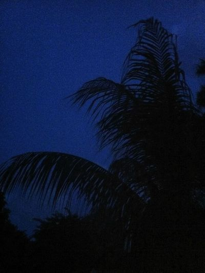 Silhouette Evening Evening Sky Moonlight