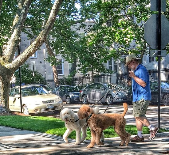 Streetphoto_color Street Photography Street Portrait Dogs
