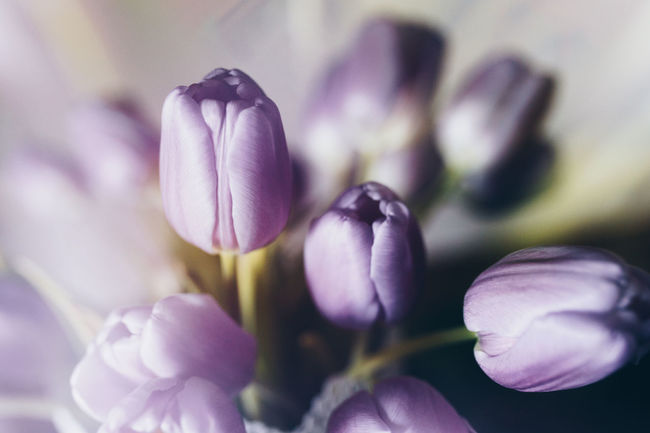 Freshness Tulips Double Flower Flower Bouquet  Flower Collection Flowers Flowers On Table Purple Purple Flower Spring Spring Flowers Spring Is Coming  Springtime Tulip