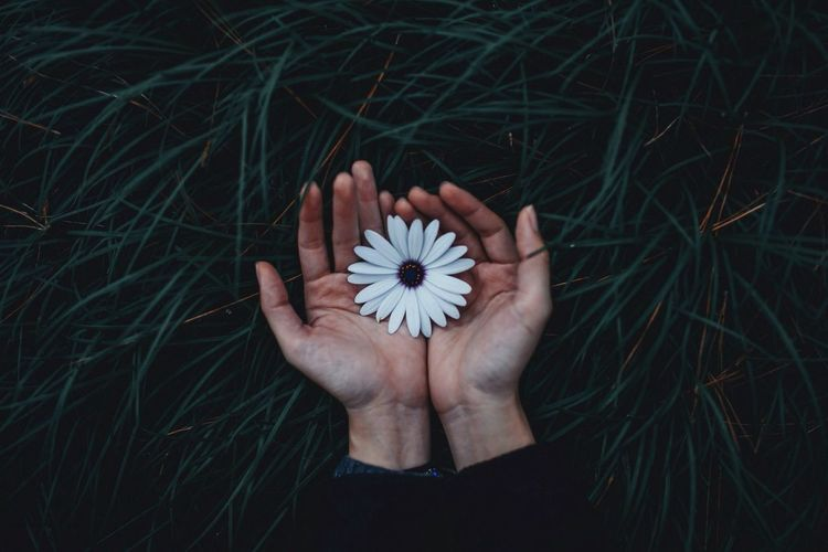 Cropped image of hand holding flower on grass