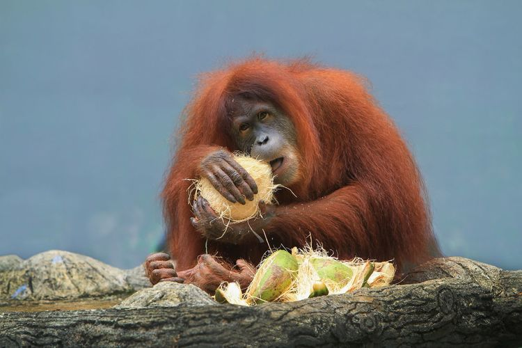 View of a monkey eating food