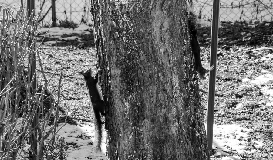 Behind the House Blackandwhite Day Eye4photography  EyeEm Gallery EyeEm Nature Lover EyeEmBestPics Grass Growth Nature Nature Nature Photography Nature_collection No People OpenEdit Outdoors Snow Tree