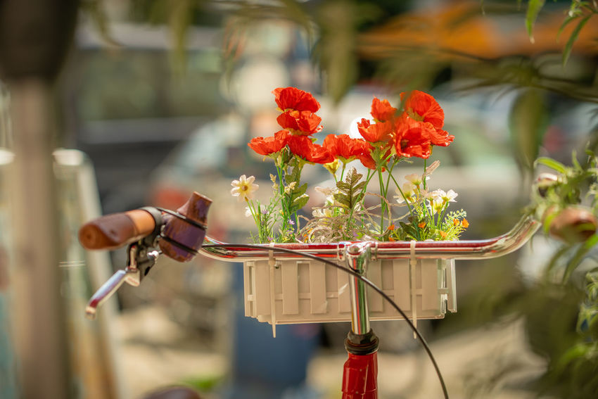 rote Lenknelken Berlin Cityscape Beauty In Nature Bicycle Close-up Day Flower Flower Arrangement Flowering Plant Focus On Foreground Fragility Freshness Outdoors Plant Red Selective Focus Streetphotography