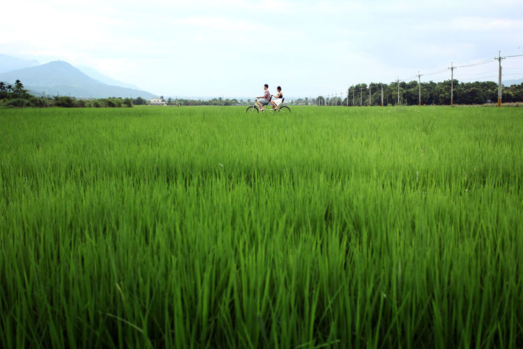 Side view of riding bicycle on rice field against sky