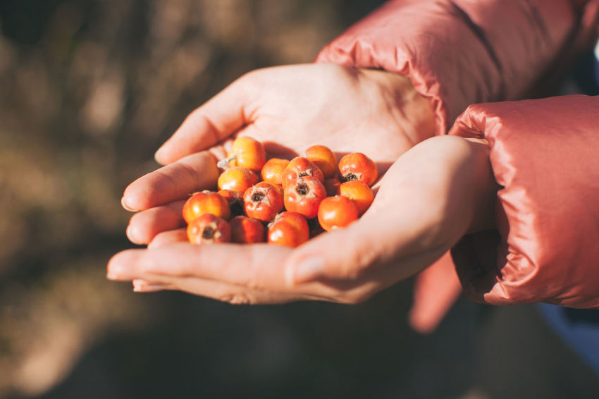 Berries Food And Drink Nature Sunlight Day Fresh Fresh Food Hawthorn Holding Human Hand Outdoors