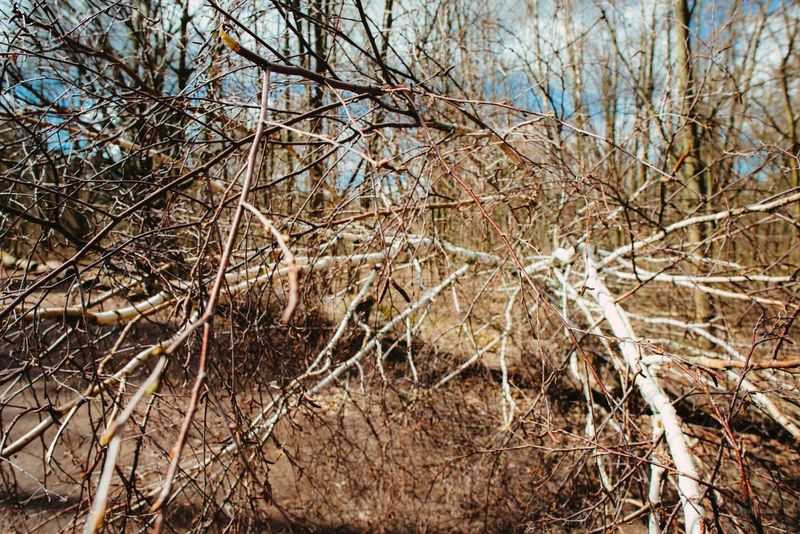 "Storm ""niklas"" legacies Storm Niklas Landscape Forest Grunewald Nature TreePorn"