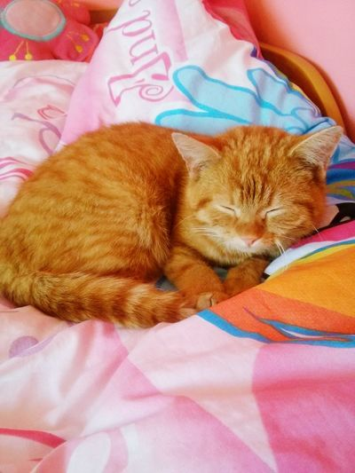 My Cat Cat♡ Cats 🐱 I Love Cats Relaxing My Little Pony Red Cat