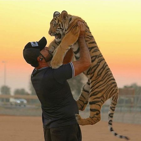 EyeEmNewHere One Animal Tiger Animal Themes One Person Leisure Activity Animal Wildlife Real People Mammal Standing Animals In The Wild Nature Lifestyles Outdoors Sunset Safari Animals Sky Day Young Adult Adult People