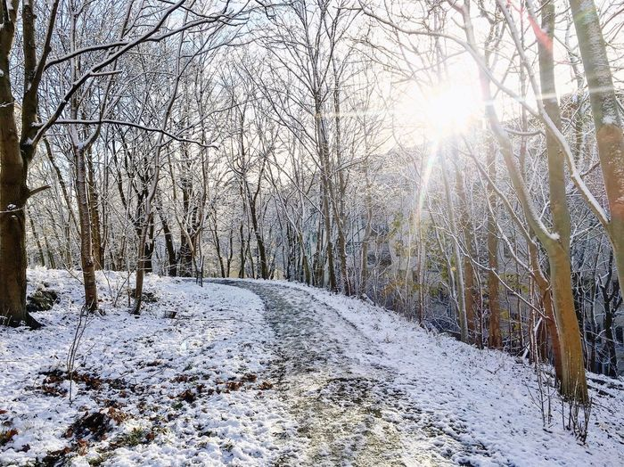 Snow in city Forrest Snow Winter Cold Temperature Bare Tree Nature Tree Sunlight Scenics Tranquil Scene No People Road
