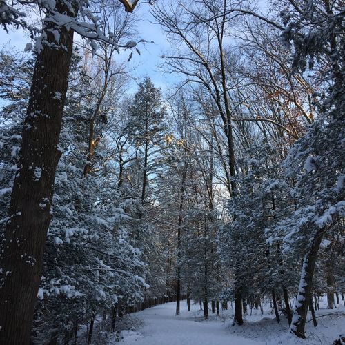 I love running through this path. Sunrise Snow Dawn Trail Running Fir Tree Snow Winter Tree Cold Temperature Nature Forest Beauty In Nature Tranquil Scene Tranquility Sky Landscape Outdoors