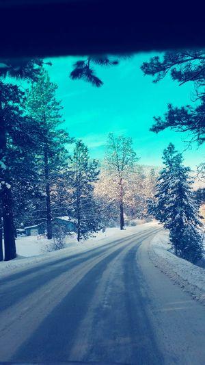 Tree Road The